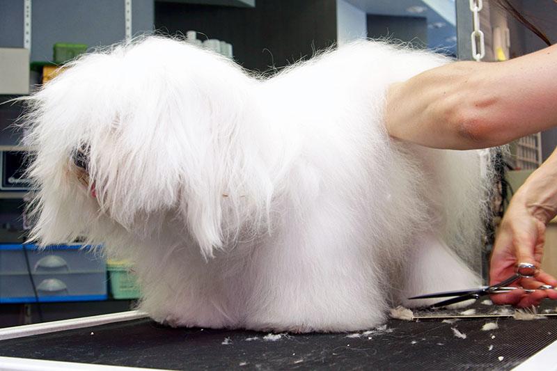 toiletteur chien chat saint-maximin